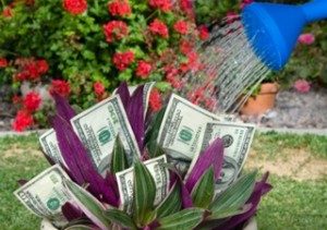 Phoenix windshield replacement cash back